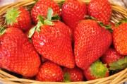 有楽町で栃木県真岡市がイチゴのフェア 完熟「とちおとめ」無料配布も