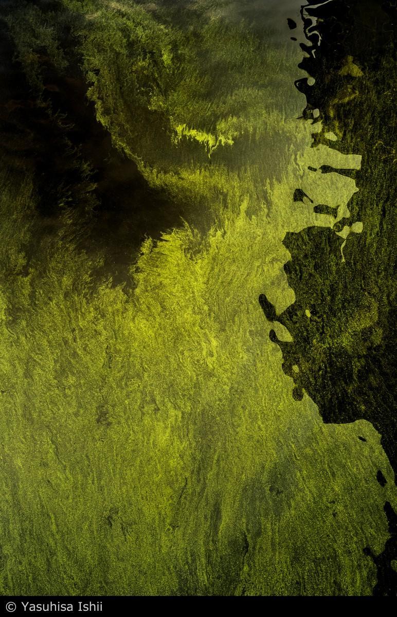 「細胞の海、神経の森」の展示作品