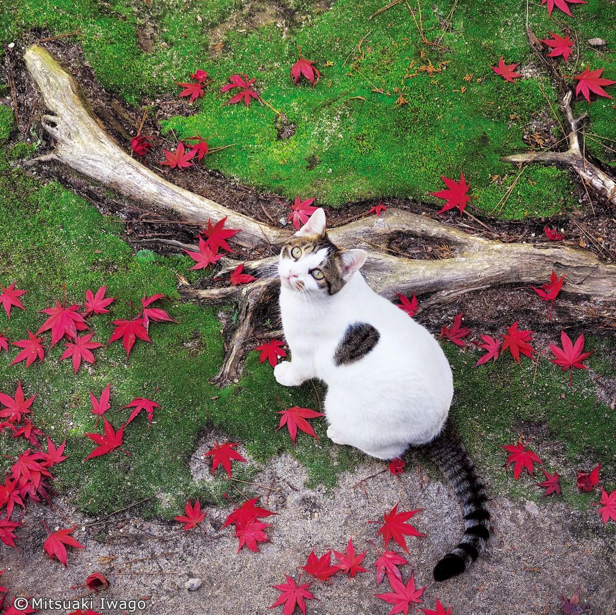 「岩合光昭写真展 ねこの京都、秋」の出品作品