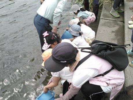新井田川へアユを放流する保育園児