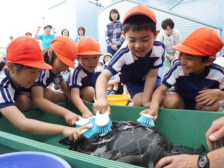 園児らは「げんき」の甲羅磨きを体験した