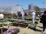 「八戸市緑化まつり」始まる 庭園樹などの展示販売や園芸講習会も