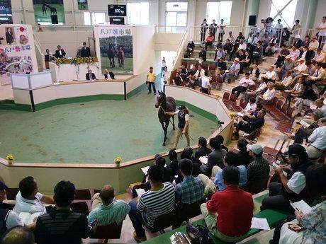 八戸家畜市場で1歳競走馬の競り市 11年ぶりに総売上1億円達成