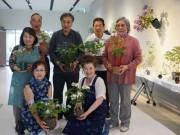 八戸で野生アジサイの展示会 鉢植えや切り花など60点