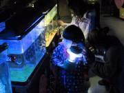 八戸の水産科学館「マリエント」で夜間開館 クリスマスに合わせ