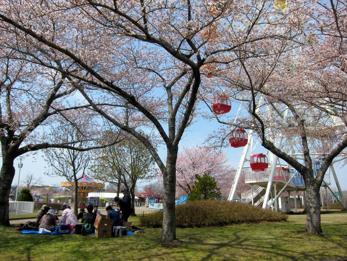 八戸公園で春まつり