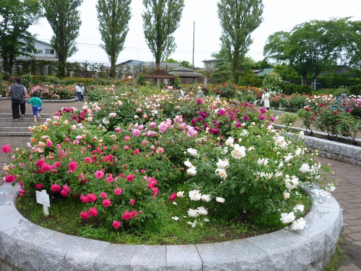 八戸公園のバラ園