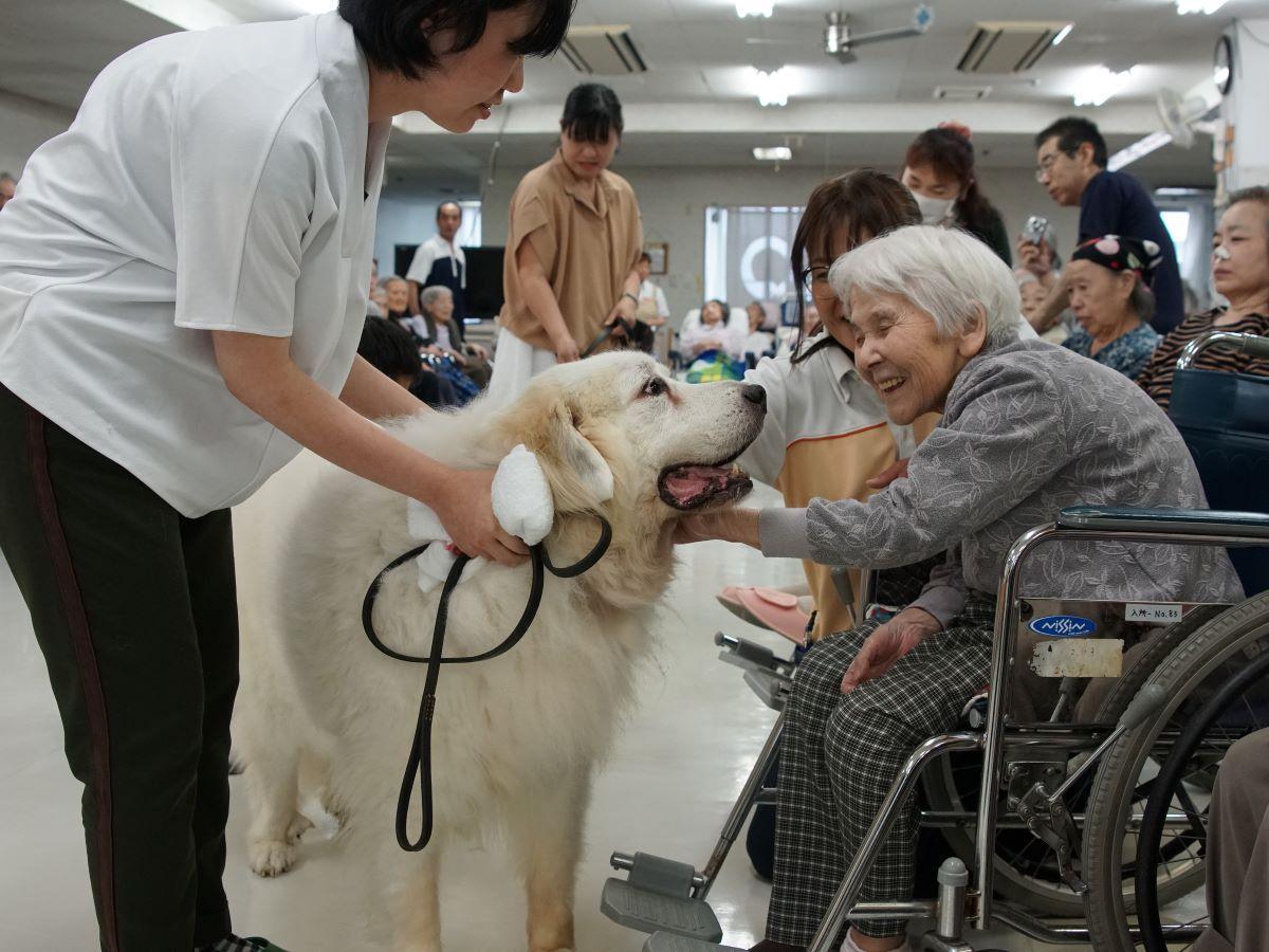 老人保健施設でドッグセラピー