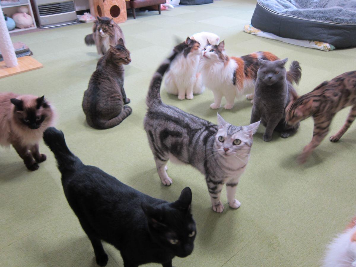 「猫八」の猫スタッフ