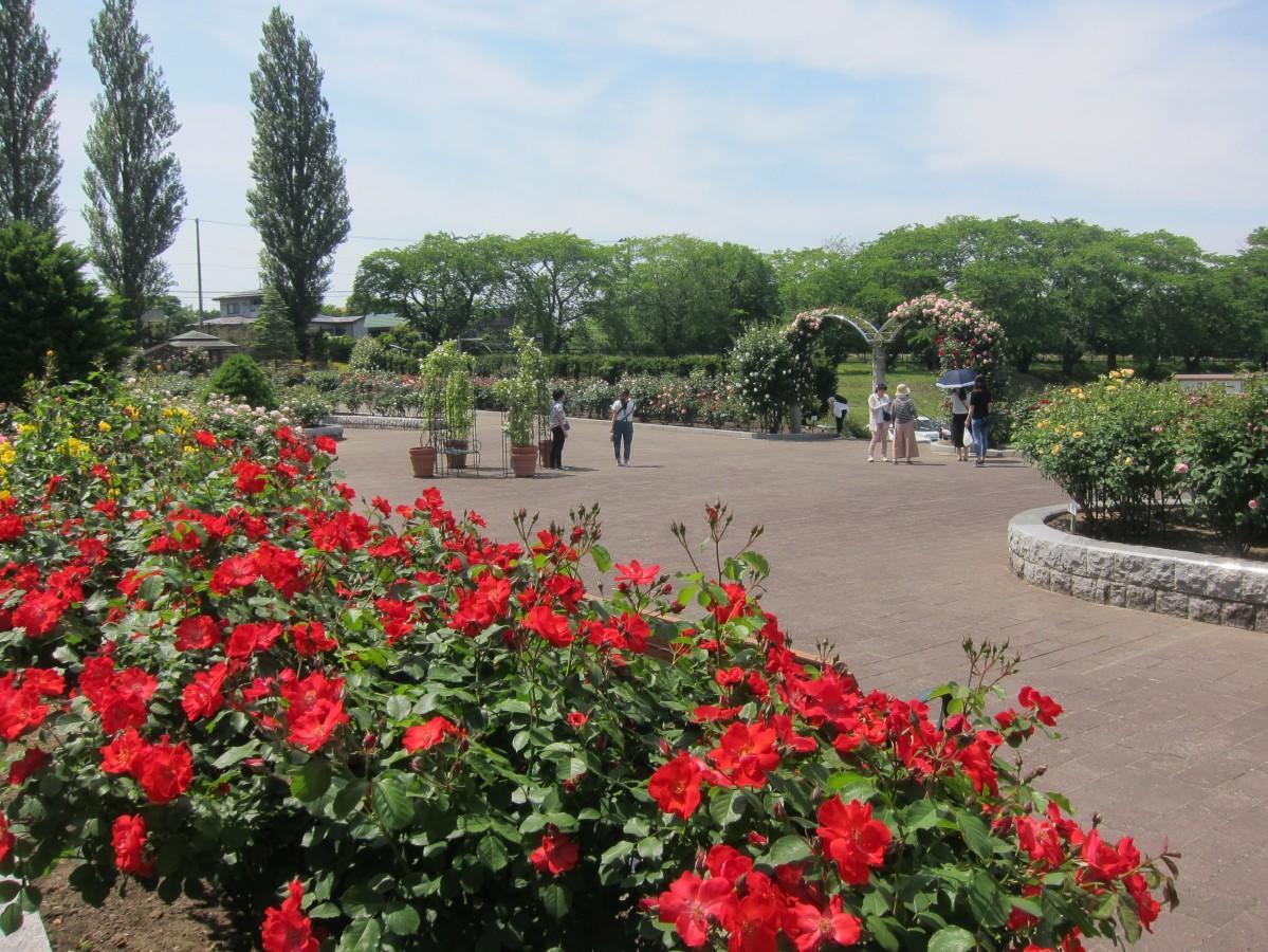 八戸公園ローズガーデン