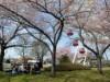 八戸公園でGWに「八戸公園 春まつり」 日替わりでステージイベント