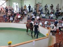 八戸家畜市場でサラブレッド1歳馬競り市「八戸市場」 29頭が落札
