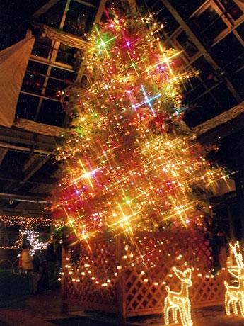 「ふれあい館」に設置されるクリスマスツリー(写真=2004年の様子)