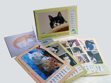 八王子で猫の写真を集めたチャリティーカレンダー 売り上げは保護猫の支援に