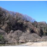 八王子・滝山城跡が「続日本100名城」選定 八王子城跡に続き