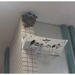 京王線各駅でツバメの巣対策 オリジナルふん受け板を設置へ