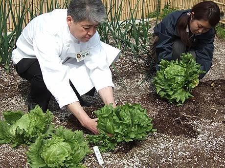 JR博多シティの屋上菜園で育てた野菜を初めて収穫