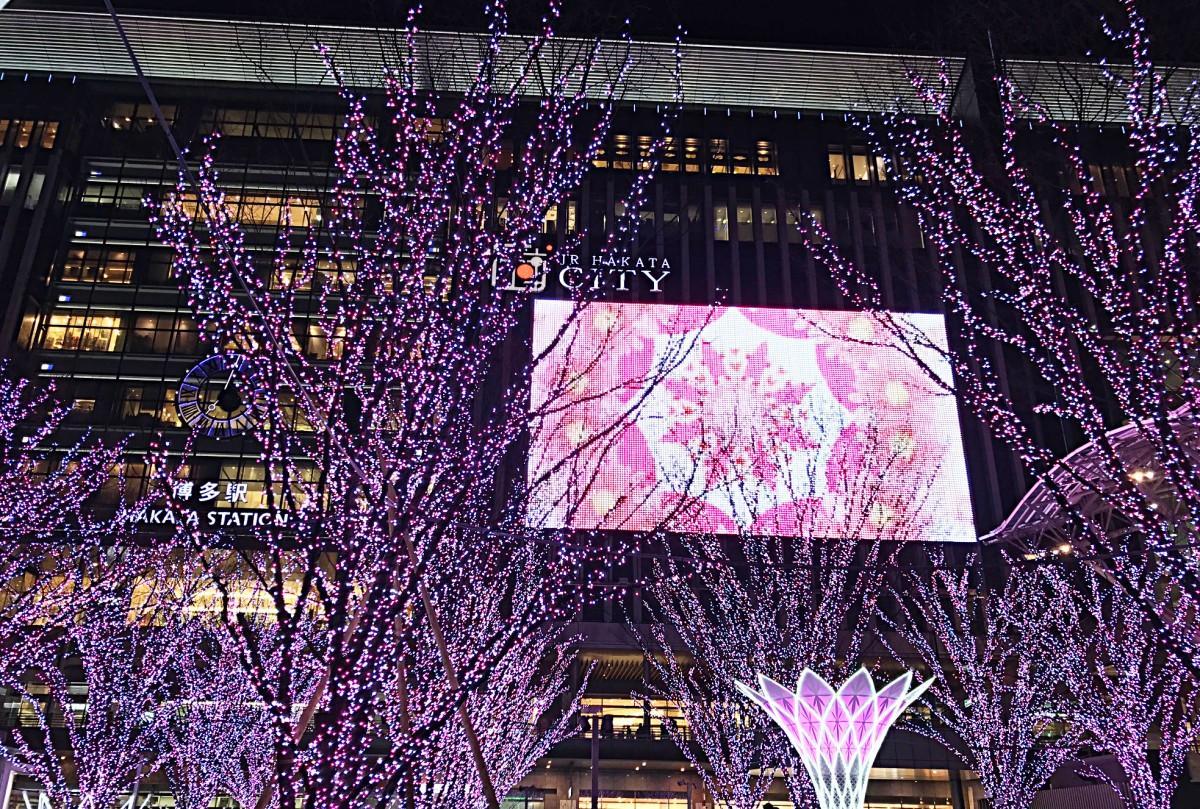 博多駅に桜色のイルミネーションが点灯
