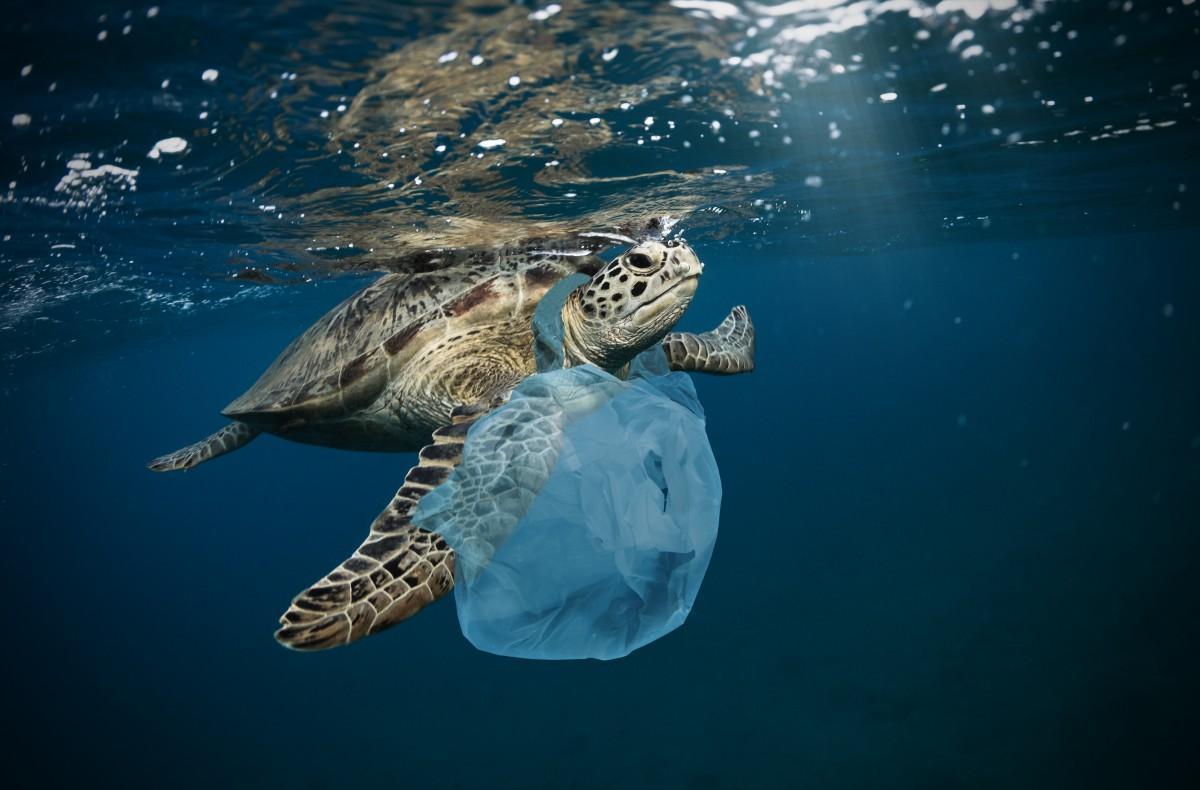 「取り戻そう、魚や人にやさしい海を 海のお掃除プラントロボット 夢コンテンスト」(一般社団法人地域企業連合会)