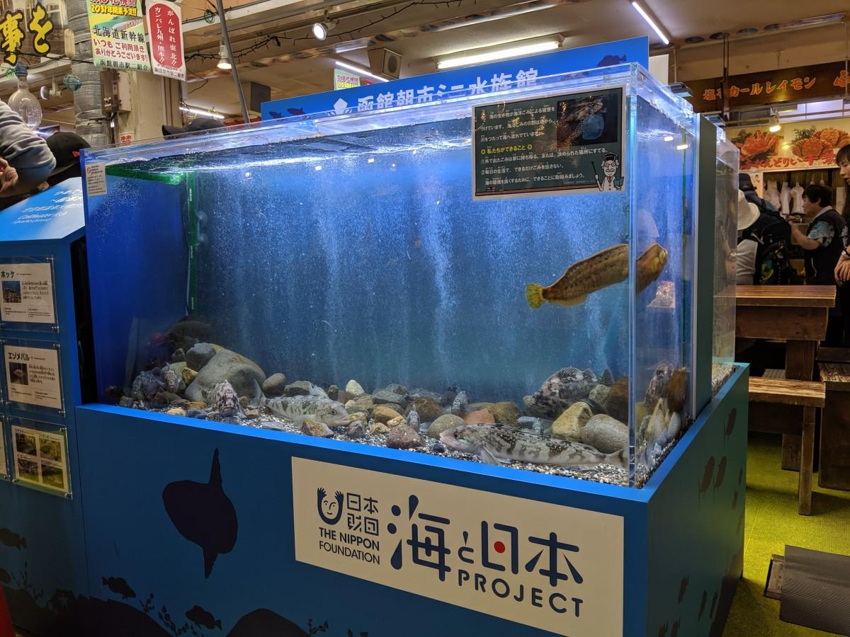 「つめたい海の魚たち~親潮水槽」で元気に泳ぐホッケ