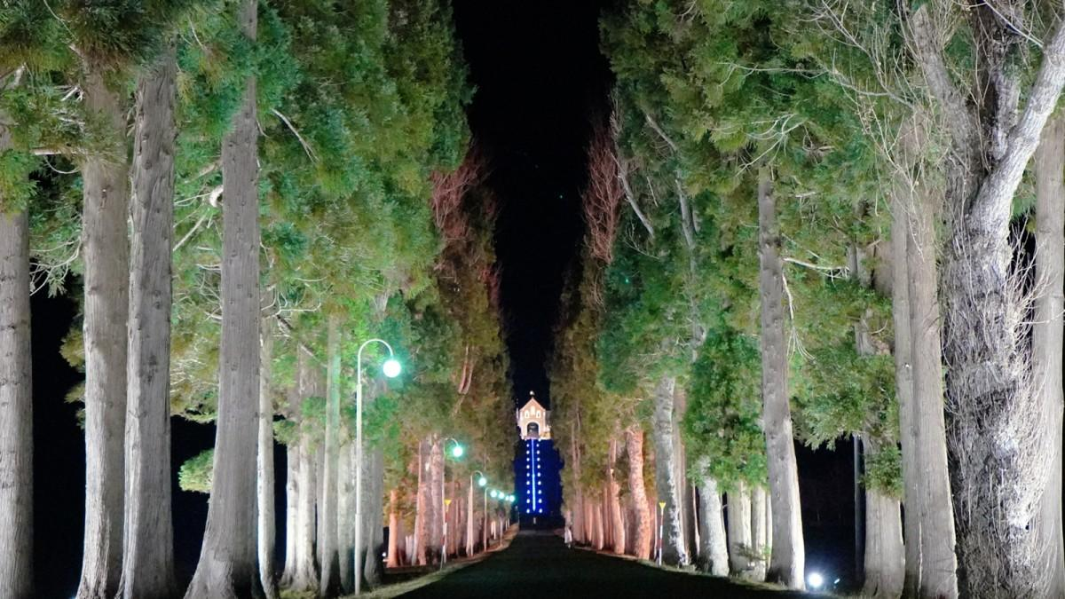 ライトアップされたトラピスト通り並木道からトラピスト修道院正門