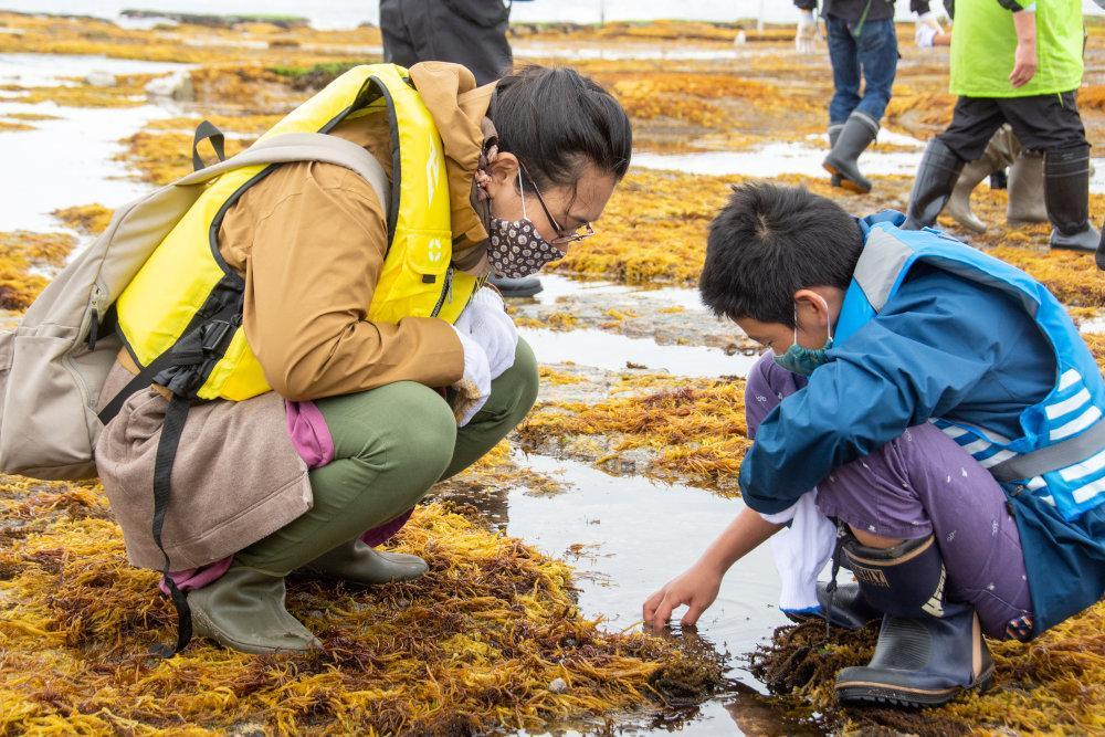潮の引いた岩場で海藻を実際に手に取って観察した