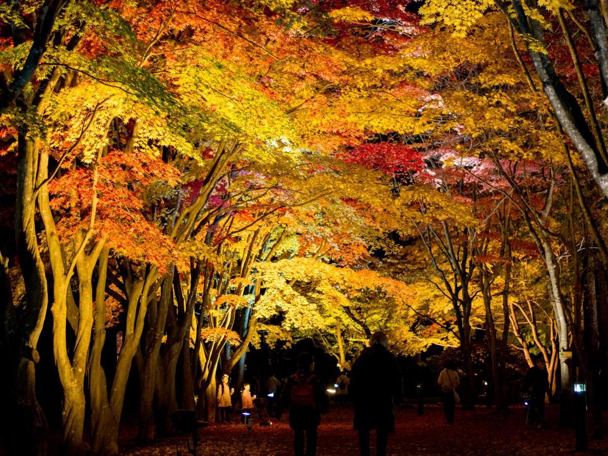 期間中毎日16時から照明を点灯し、約100メートルのカエデ並木を幻想的に照らし出す(過去の様子)