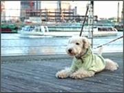 横浜ベイクォーターで犬が主役のイベント「ベイドッグフェスタ」が開催される