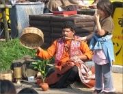インド大道魔術師が横浜初上陸-4000年の秘術「マンゴーの樹」