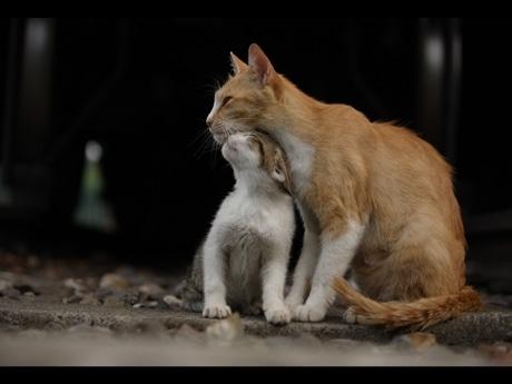 中川こうじさんが撮影した野良猫