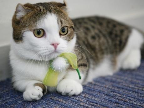 「猫カフェれおん」の店長のレオン君