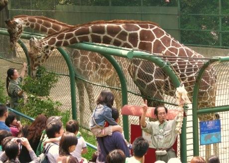 野毛山動物園の「アミメキリン」