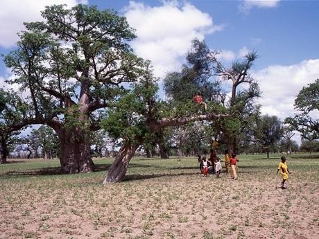 写真展「バオバブの記憶 ~大樹に抱かれて~」