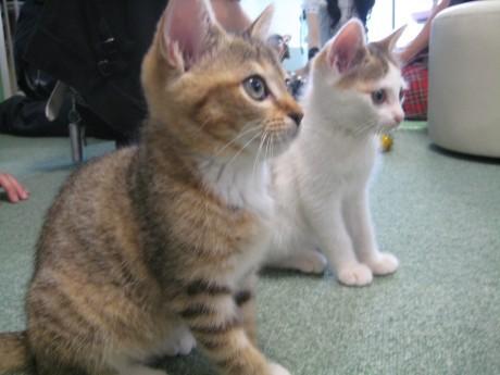 店内の猫スタッフたちは全て今年生まれ