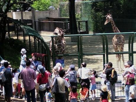 野毛山動物園の様子