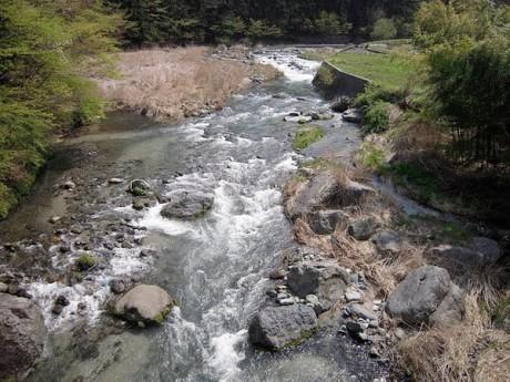 水源の森を流れる道志川