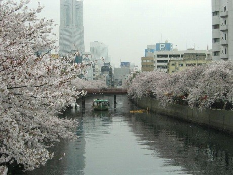 大岡川を運航する濱進「屋形船」