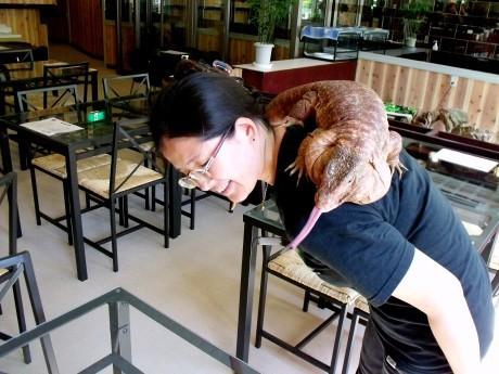 横浜亜熱帯茶館オーナーの長野睦さんとアルゼンチンレッドテグー