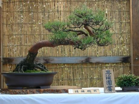 前回の盆栽展の出品作品