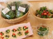 LED菜園による「横浜・馬車道ハイカラ野菜」をネット販売