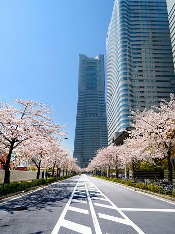 500メートルの桜並木が続く「さくら通り」&copyアマノスタジオ