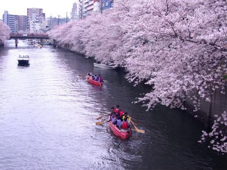 桜並木の下で「Eボート乗船会」も