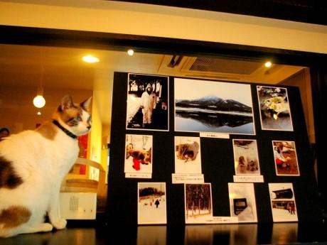 「Cat Cafe Miysis」展示コーナーの様子
