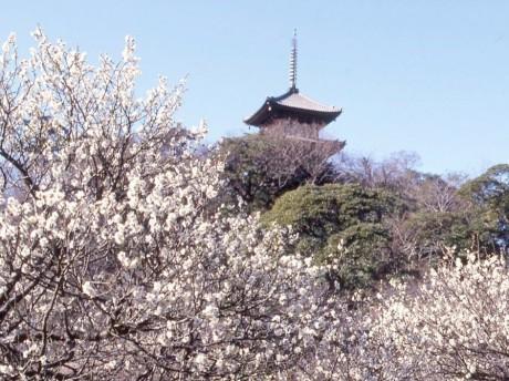 横浜三溪園の観梅会の様子