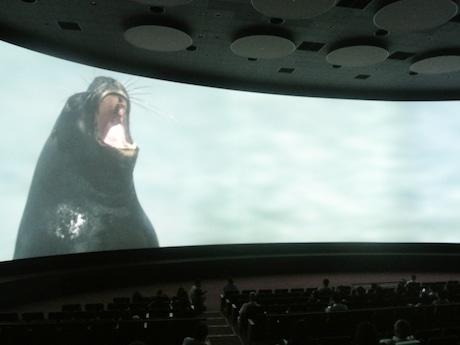 「シアター 23.4」で上映される「ICE WORLDS(氷の世界)」