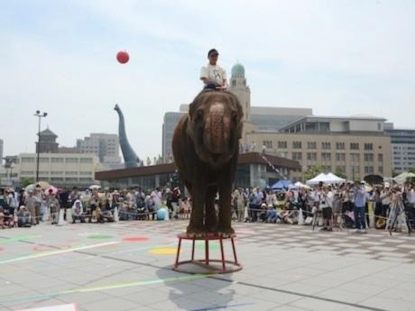 集まった観客を前にショーを披露した象の「ランディ」