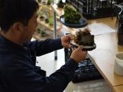 関内で盆栽を楽しむ茶話会「盆栽カフェ」-ミニ盆栽やコーヒーの即売会も