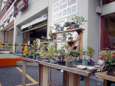 中華街パーキングの盆栽カフェ