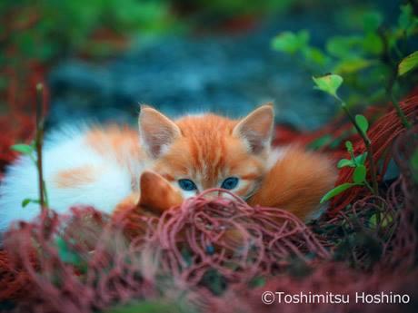 今回の写真展の企画者である星野俊光さんによる作品 © Toshimitsu Hoshino