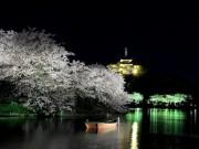 三溪園で夜桜を楽しむ「観桜の夕べ」 人気のさくらアイスも